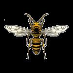 コガタスズメバチの画像