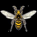 ヒメスズメバチの画像